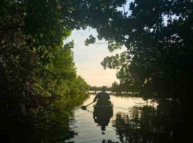 The East River is a beautiful kayak trail winding through mangrove tunnels and through pretty little lakes, all filled with birds and alligators. (Photo: Bonnie Gross)