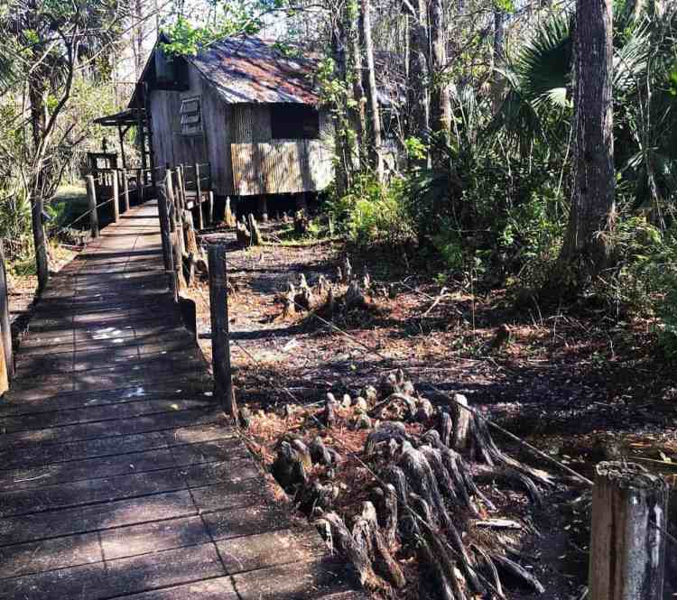 An easy two-mile stroll down East Main Trail takes you to a private cabin that makes a great turn-around destination. Its a small, rustic building of old wood and corrugated metal with a sign at the front door proudly identifying it as the Fakahatchee Hilton.  (Photo: Bonnie Gross)