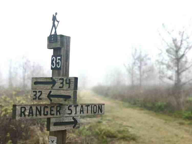 Hiking trail marker on a foggy morning in Lake Louisa State Park in Clermont. (Photo: Bonnie Gross)