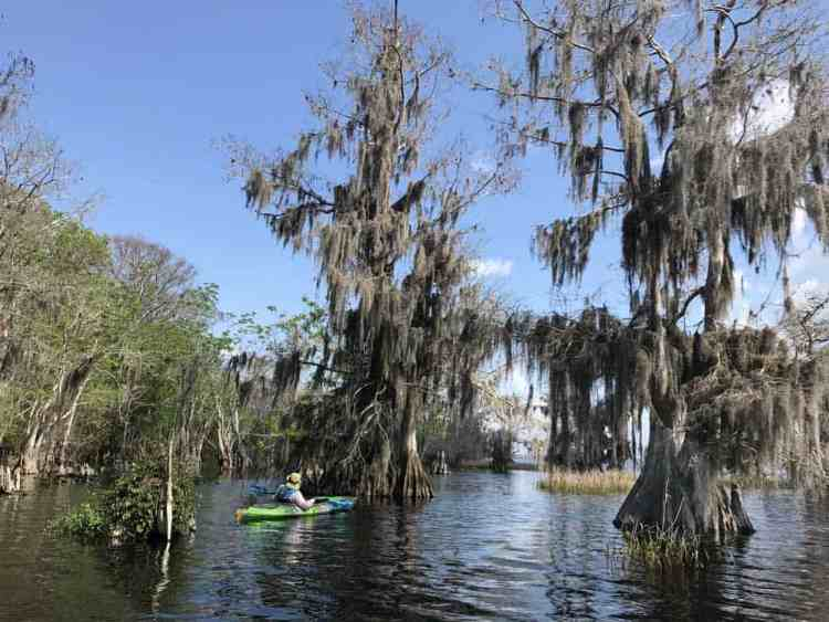 Blue Cypress Lake, 22 miles west of Vero Beach near Yeehaw Junction, is a spectacular place to kayak. (Photo: Bonnie Gross)