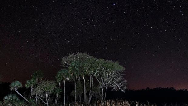 Night sky at Kissimmee Prairie Preserve.