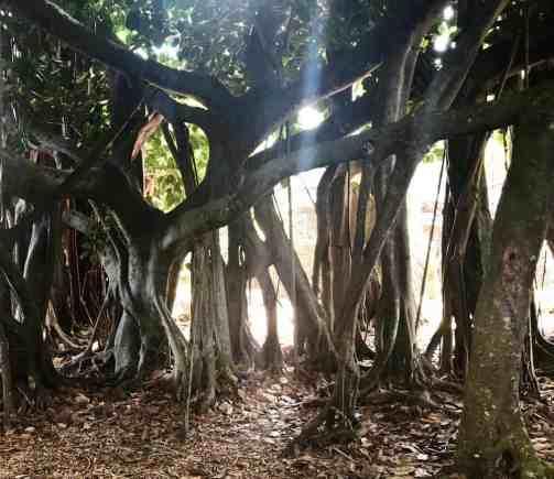Pinecrest Gardens (Photo: Bonnie Gross)