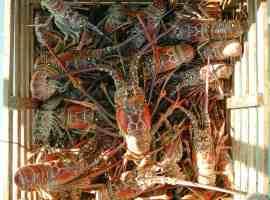 florida lobster trap photo by Florida Keys News Bureau