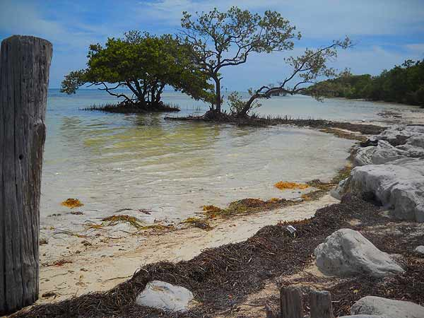 Anne's Beach is lined with mangroves. (Photo by Bonnie Gross)