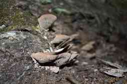 Fungi growing on a dead tree along the trail. Decaying tress provide essential habitat for many species