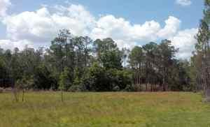 Field near campsite at Colt Creek State Park