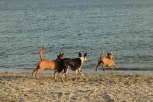 Fort DeSoto Dog Beach