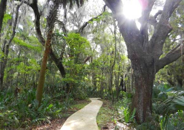 Trail to the observation tower on the south end of Paynes Prairie Preserve State Park near Gainesville.