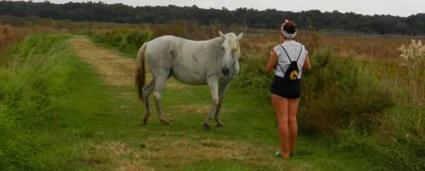 Wild horse in Paynes Prairie Preserve State Park near Gainesville.