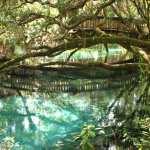 canstock-juniper-springs