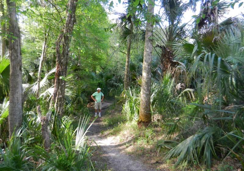 Hammock Trail At Hontoon Island Florida Rambler