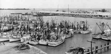Shrimp boats in Key West Seaport in the 1960s.