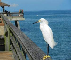 Naples, Fl, bike trails and beaches