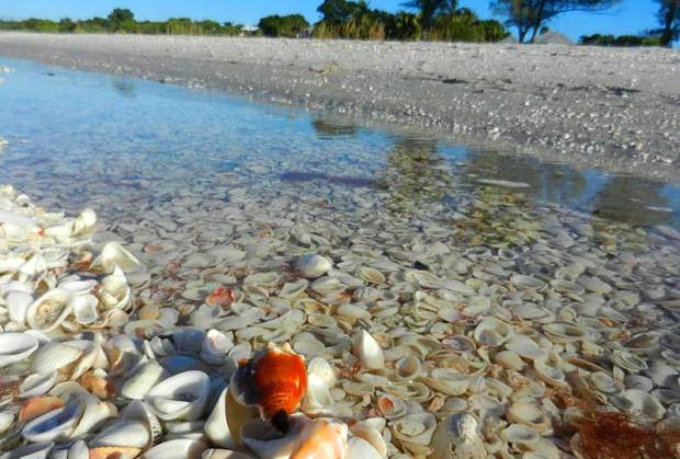 Seashells are easy to collect on Sanibel.