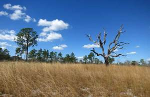 View along Tiger Creek Preserve Trail