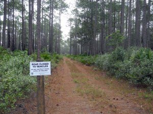 Tiger Bay forest road