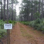 "Tiger Bay State Forest offers escape from the ""roar of the engines"""