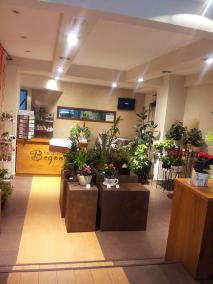 floristeria-begonia