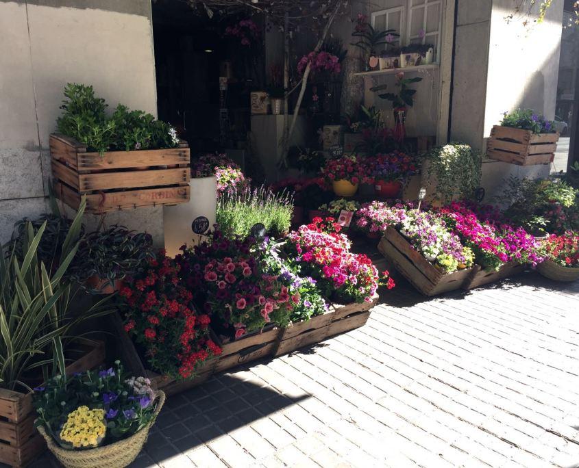 Plantas para terraza especial decoraci n for Especial terrazas