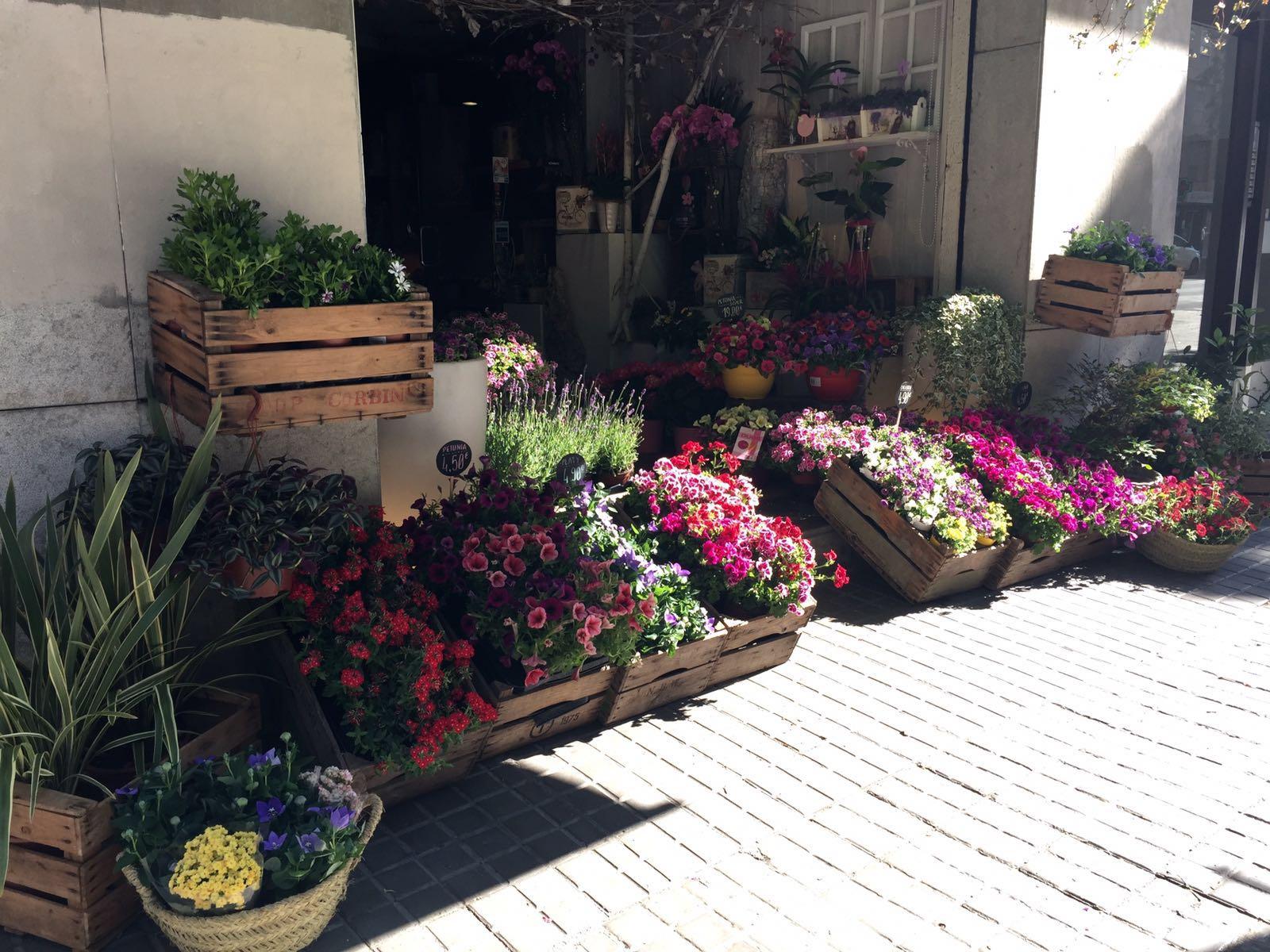 plantas para terraza colorido en tus macetas