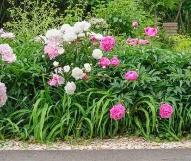 Flower Garden Design