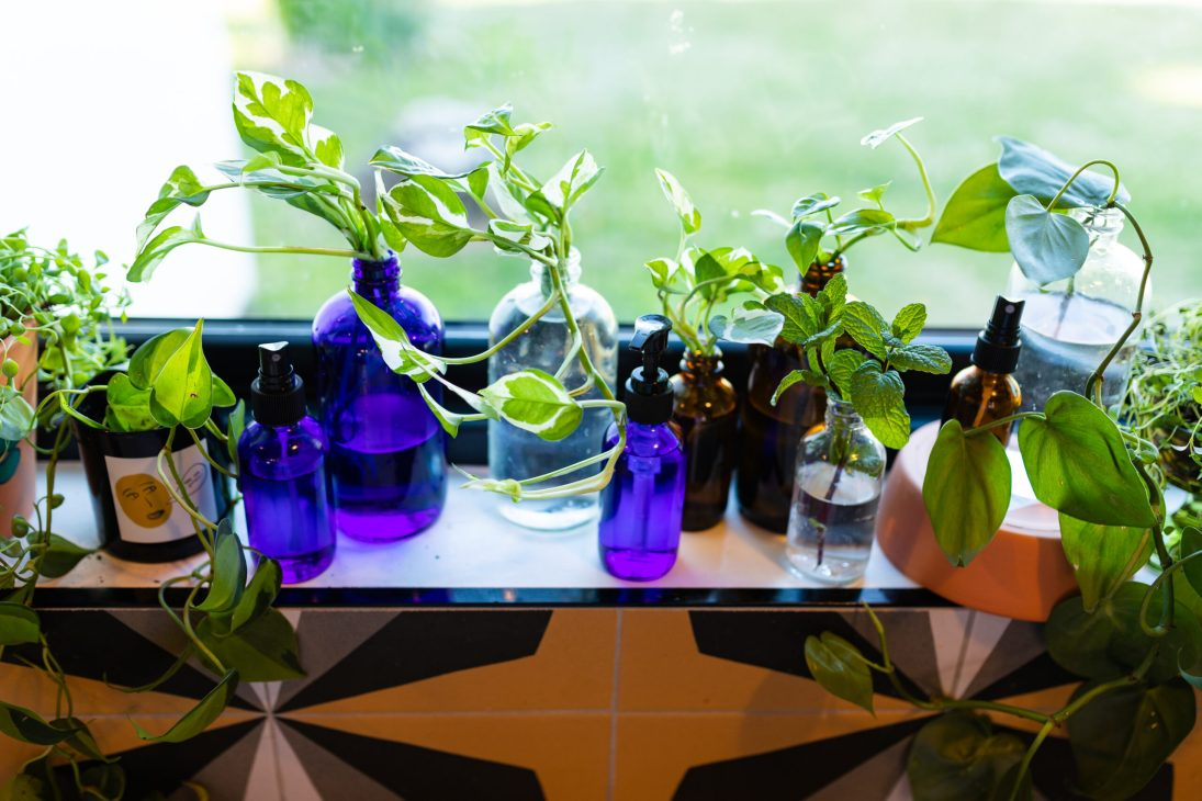 propogation-station-plant-clippings-repurposed-glass-bottles