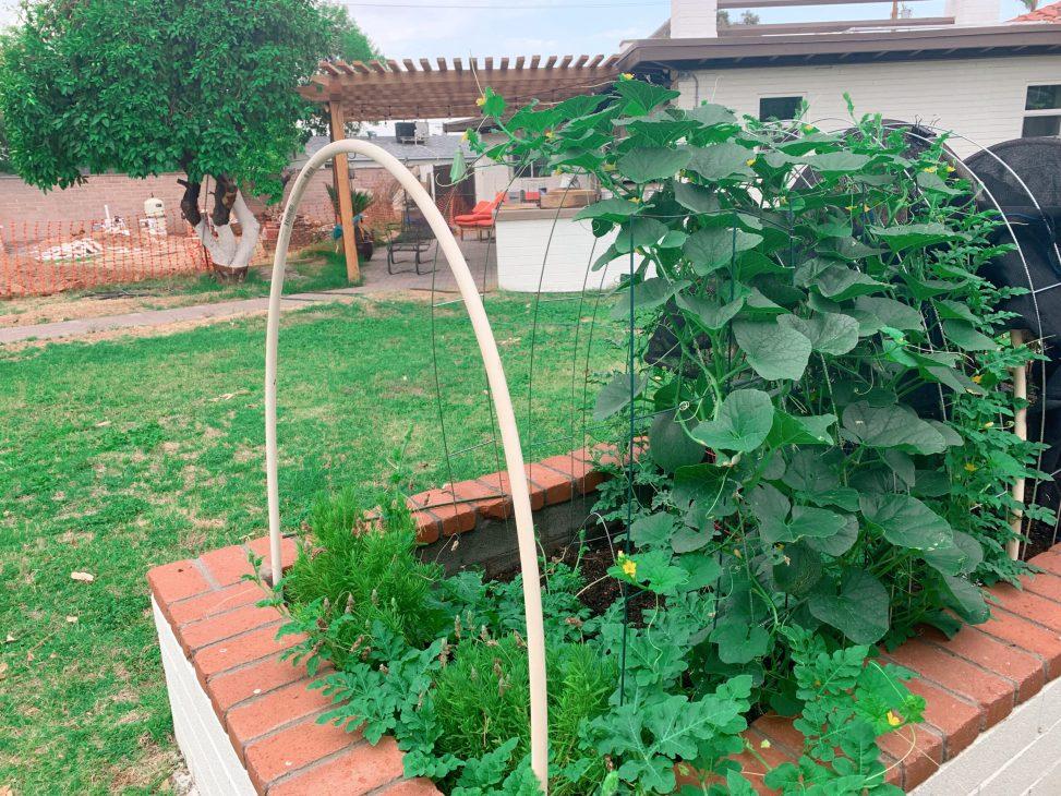 vertical-gardening-summer-garden-vining-fruit