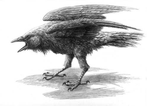 Pencil sketch of Rava in crow form.