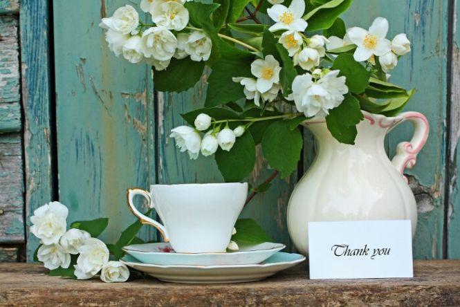 gardenia flower meaning  flower, Natural flower