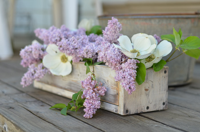 How to Grow Lilacs from Cuttings, FlowerPatchFarmhouse.com