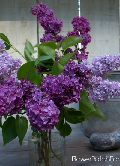 How to Propagate Lilacs by cuttings, FlowerPatchFarmhouse.com