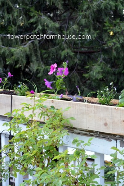 Cheap and Easy Cedar Fence Board Planters