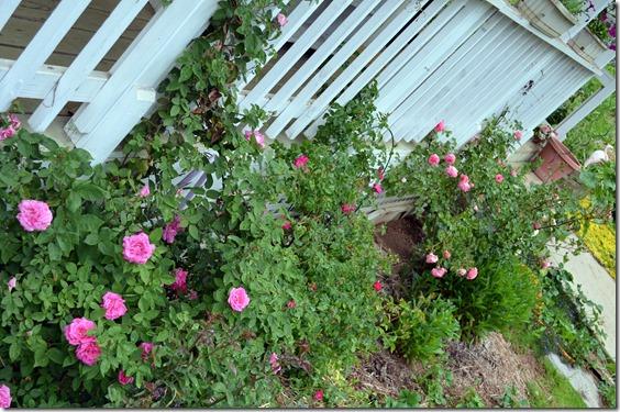 side roses