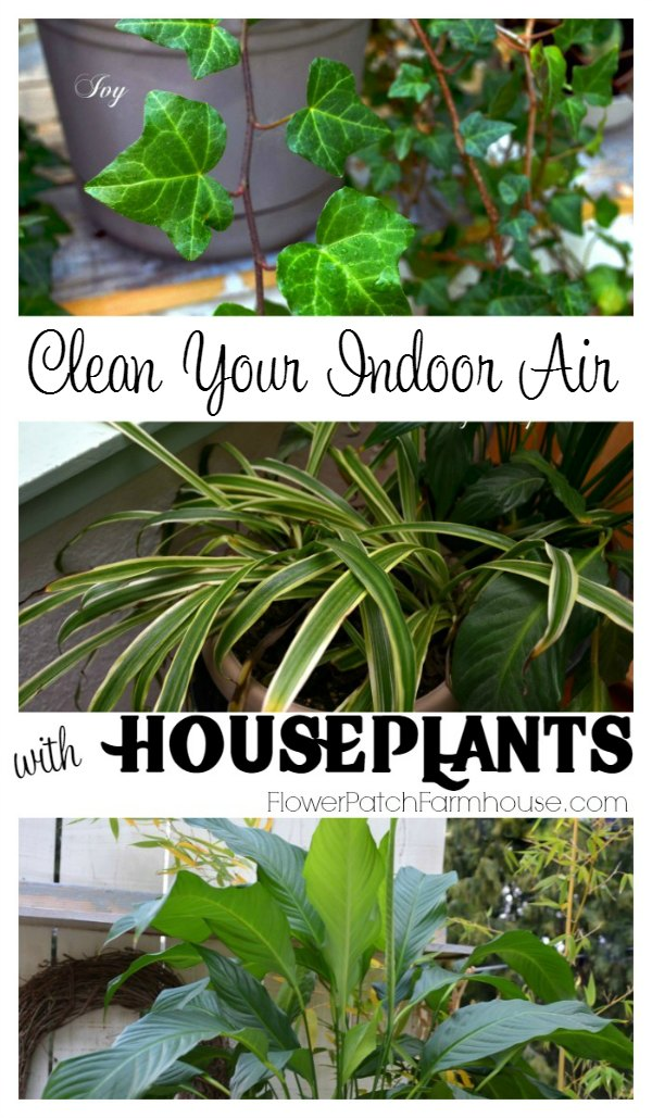 Clean your Indoor Air with House Plants.  An inexpensive way to take care of pollutants, toxins and other bad stuff in our home environment.