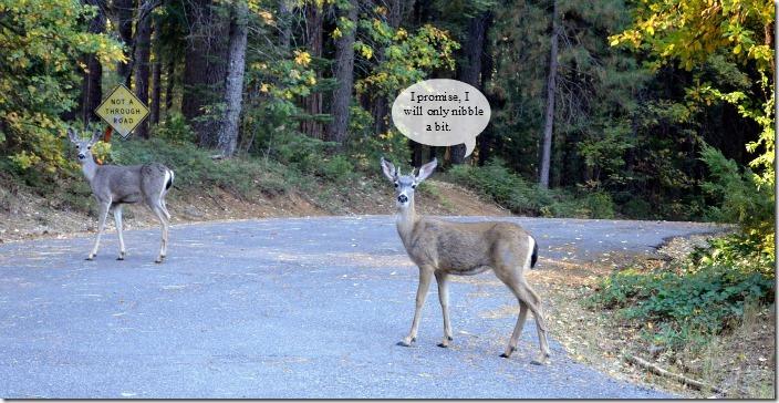deer leaving
