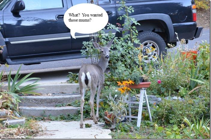 deer yard