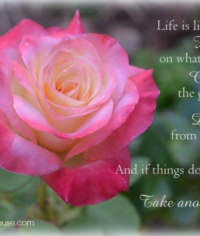 Princess Diana Rose Inspriational Quote