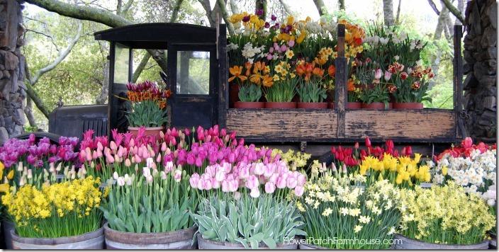 flowerabundance