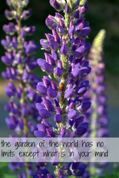 the garden of the world lupine photo and quote