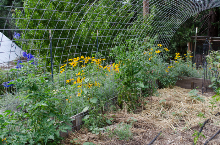 DIY Greenhouse  (2 of 8)