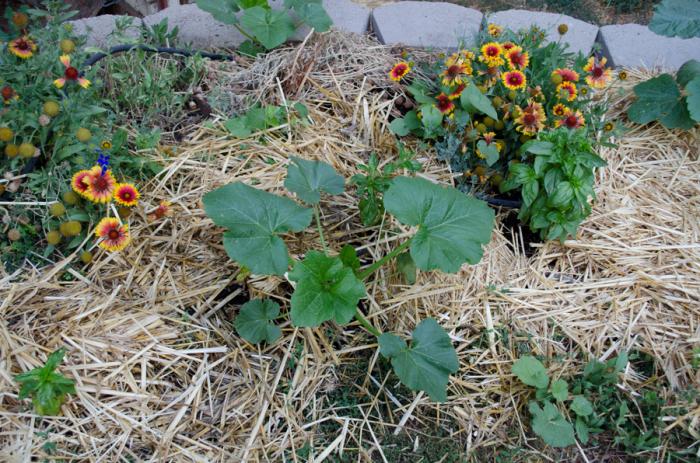 DIY Greenhouse  (6 of 8)