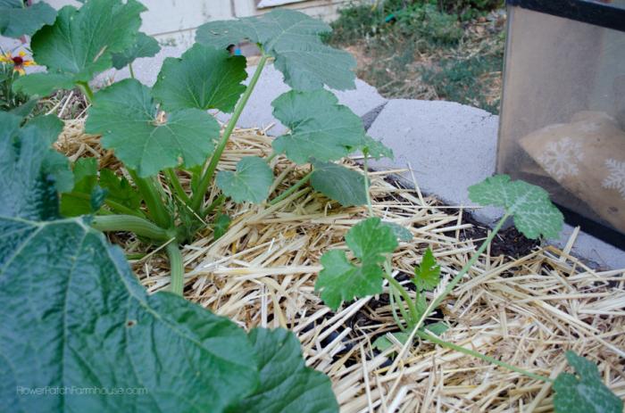 DIY Greenhouse  (7 of 8)