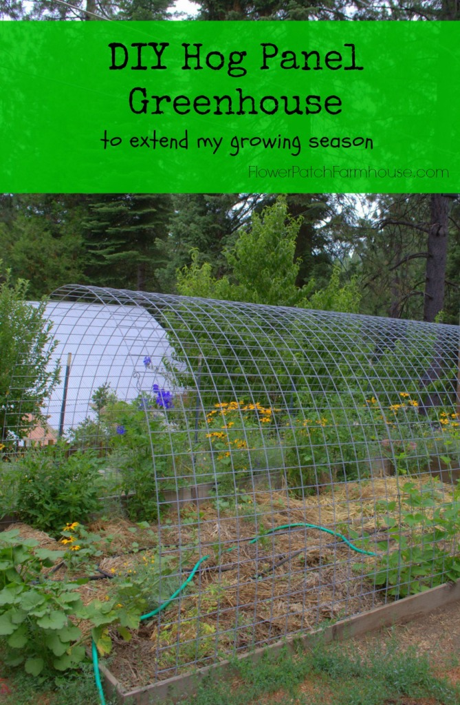 DIY Hog Panel Greenhouse FlowerPatchFarmhouse.com