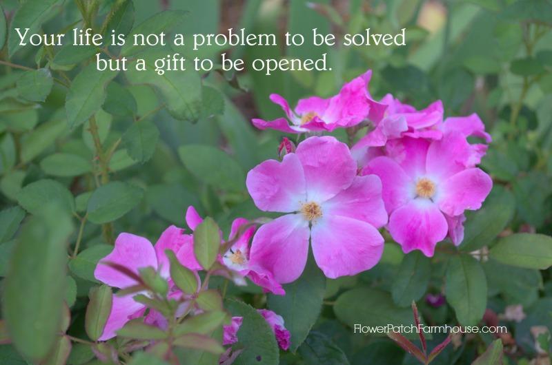 Life not a problem 2