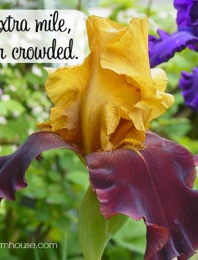 Go the extra mile inspirational quote, FlowerPatchFarmhouse.com