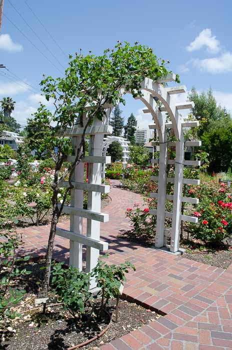 Luther Burbank Garden, FlowerPatchFarmhouse.com (11 of 50)