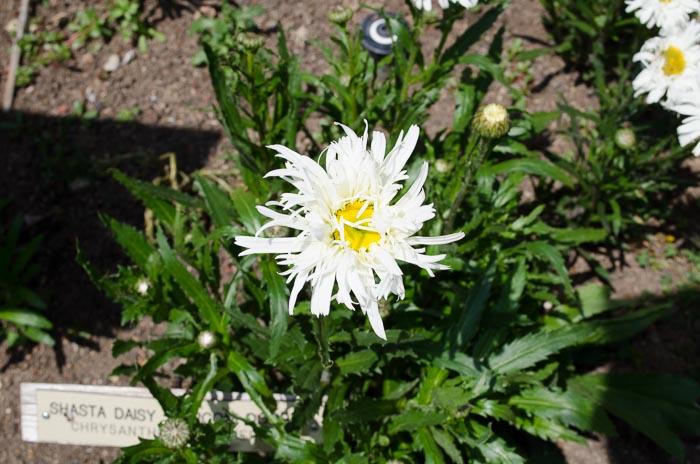 Luther Burbank Garden, FlowerPatchFarmhouse.com (40 of 50)