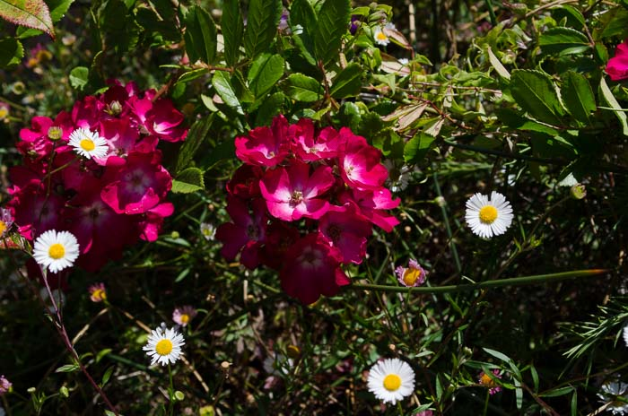 Luther Burbank Garden, FlowerPatchFarmhouse.com (5 of 50)