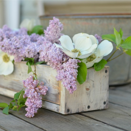 Rooting lilacs, easy and fragrantly fun, FlowerPatchFarmhouse.com