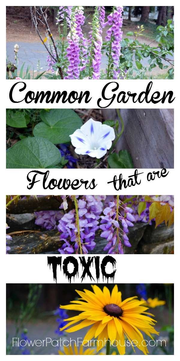 Did you know that many garden flowers are toxic? Come read which 10 I grow and why you should research before planting. FlowerPatchFarmhouse.com